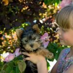 Yorkshire Terriers Good With Kids