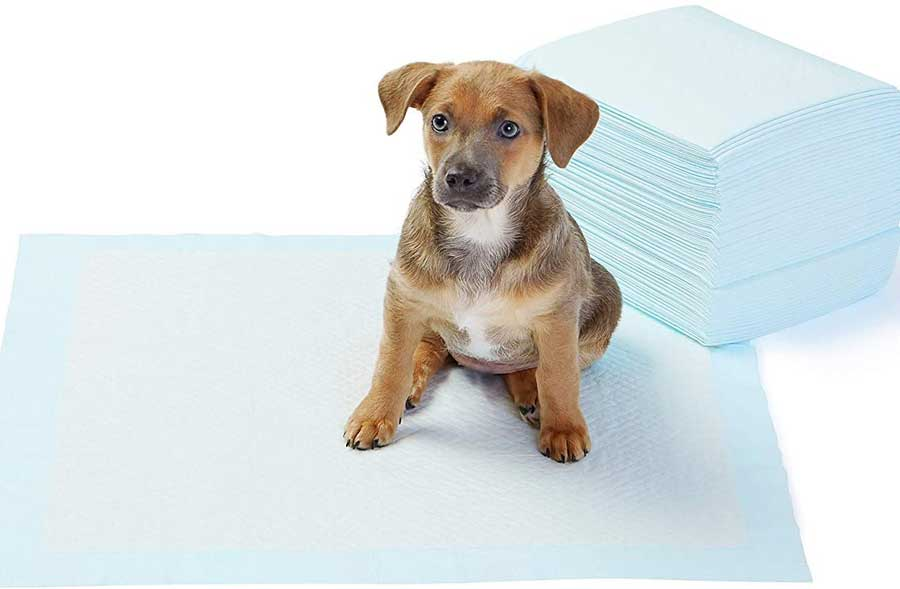Puppy To Go On Potty Pads