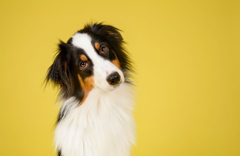Why Your Dogs Have Separation Anxiety