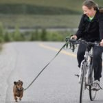 Dog running with Bicycle