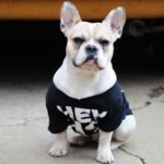 French Bulldogs Ears Stand Up
