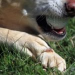 How To Stop A Dog's Nail From Bleeding
