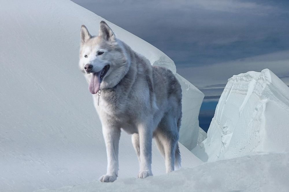 Is Ice Bad For Dogs