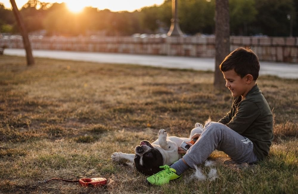 Why Frenchies are good for kids?