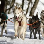 Difficult To Train Dog Breeds