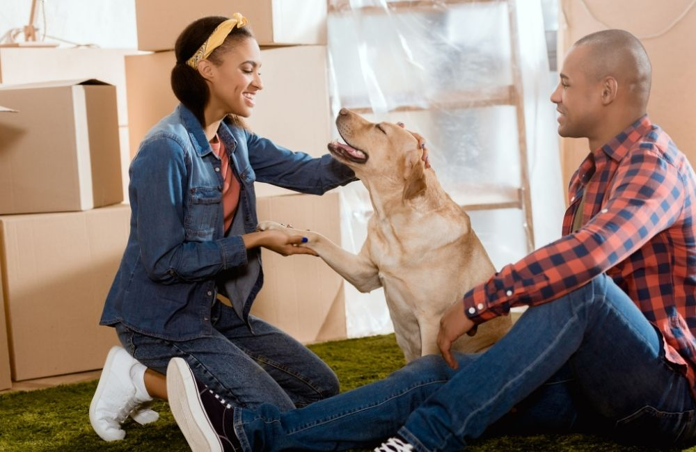 Are Labradors Good Apartment Dogs?