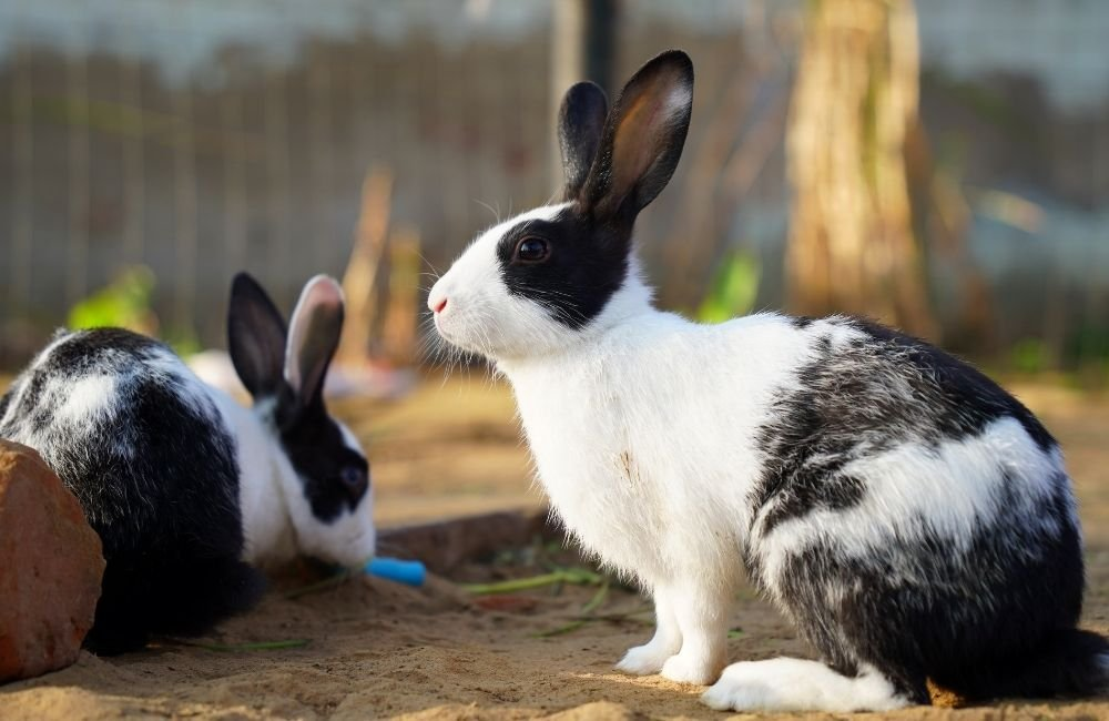 How Do Rabbits See The World