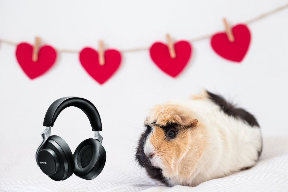 Music for Guinea Pigs
