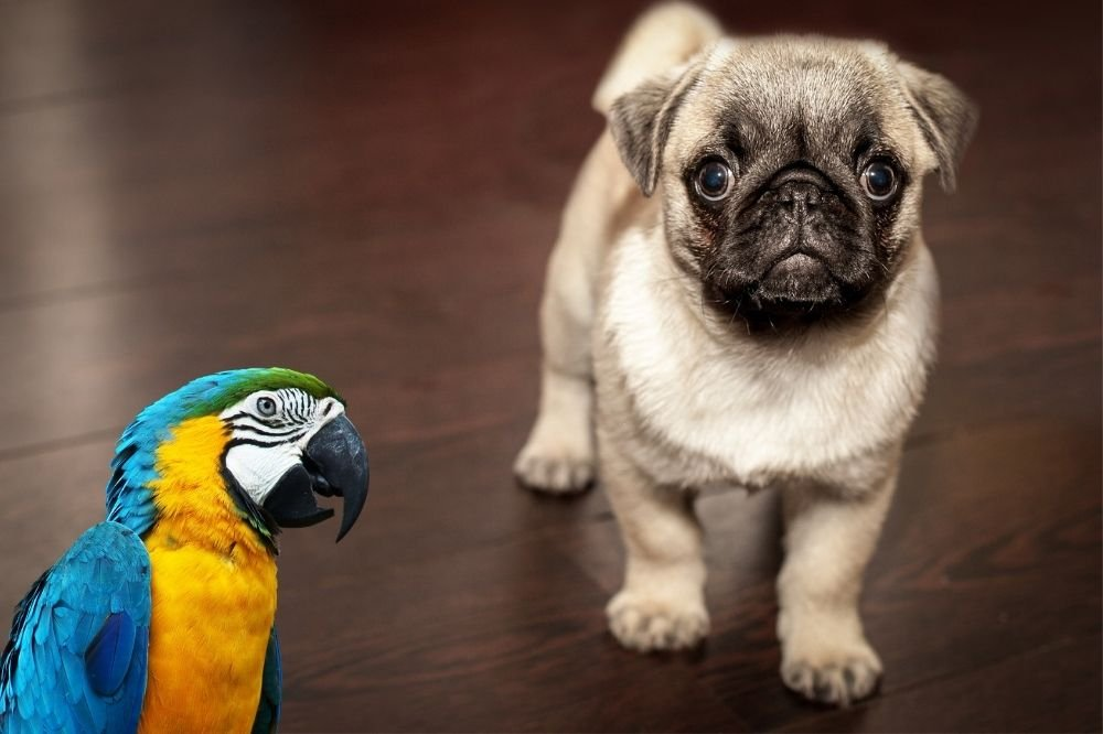 Parrots and Dogs