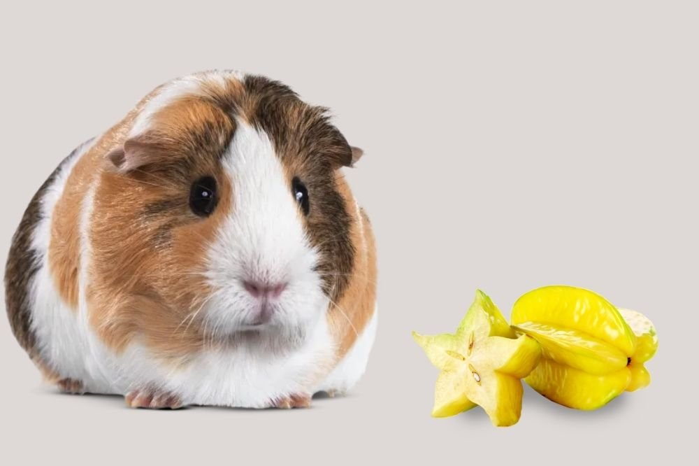 Star Fruit and Guinea Pigs