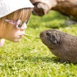 Kiss to your Guinea Pigs