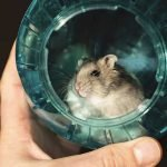 Hamster In A Ball