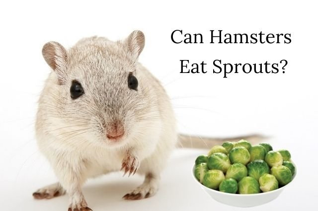 Eat Brussel sprouts
