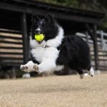 Train Your Dog to Fetch