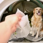 Dryer Sheet are toxic for dog