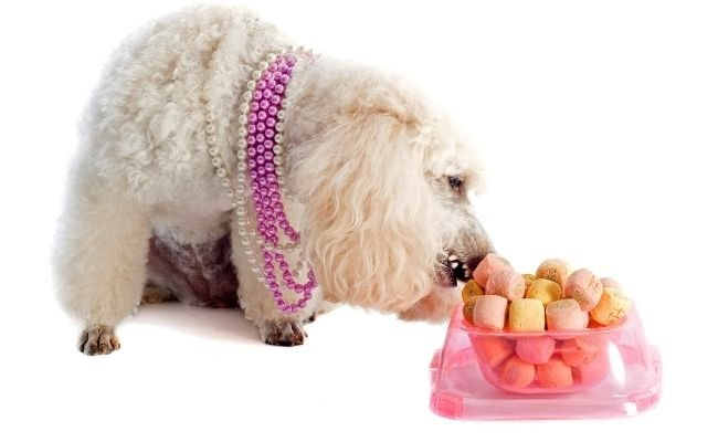 Ultimate Guide To What Poodles Can (And Can't) Eat