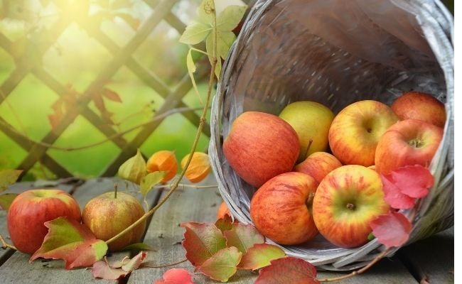Health Benefits of Apples For Hamsters