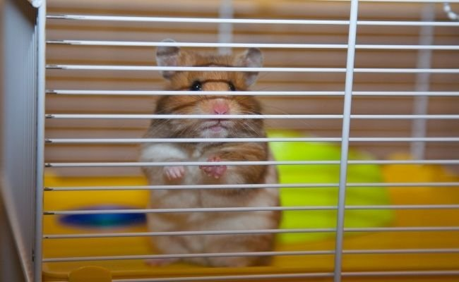Clean Hamster Cage