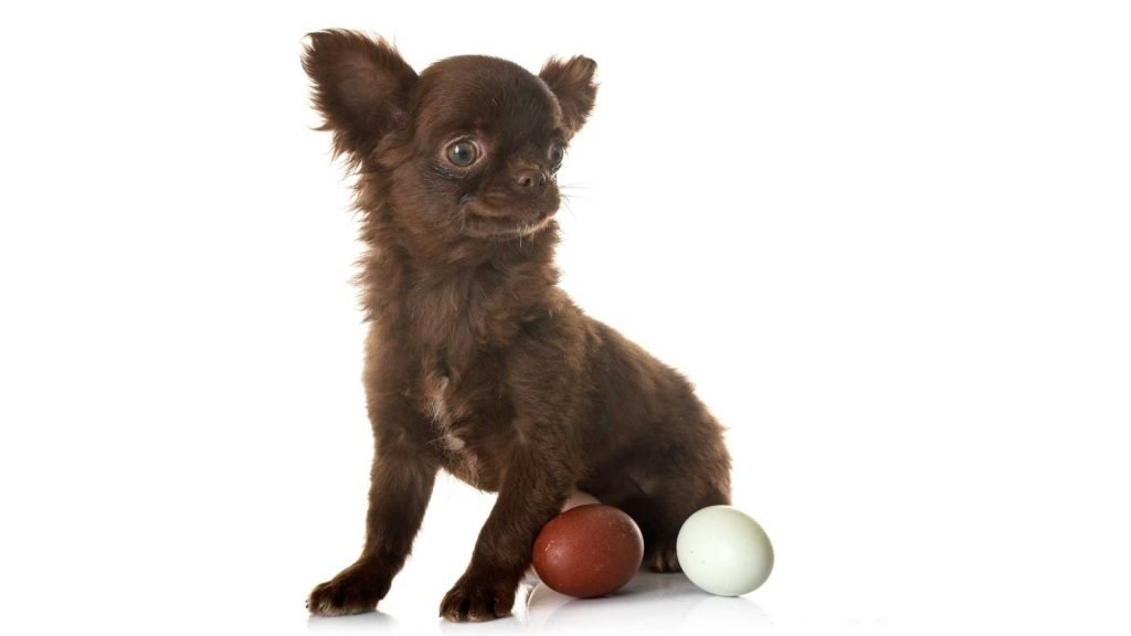 are eggs safe for dogs?
