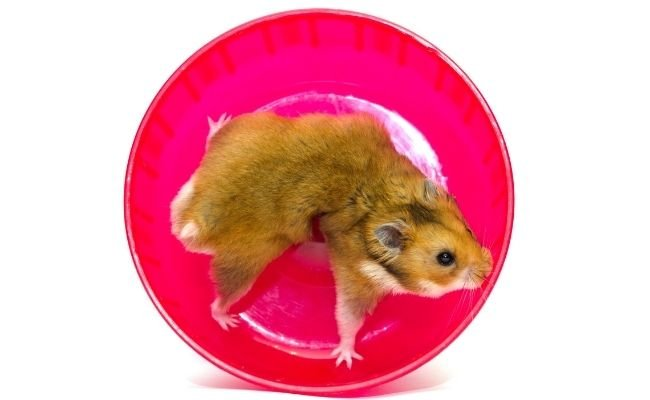 Is wheel good for hamsters
