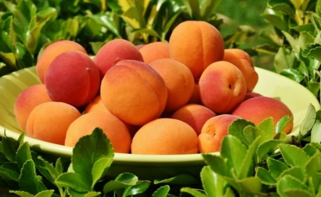 Nutrition In Apricots