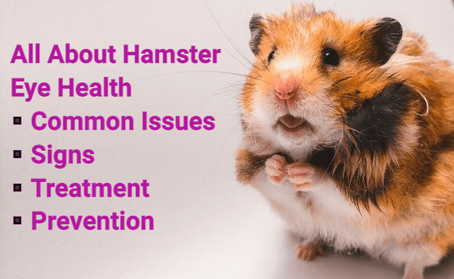 All About Hamster Eye Health