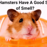 Do Hamsters Have Good Sense of Smell