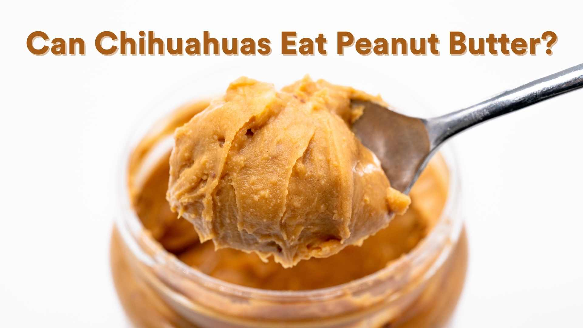 can chihuahuas eat peanut butter