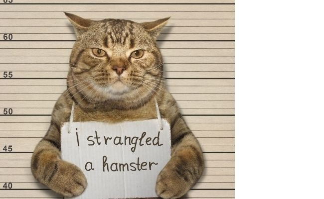 Hamster-Cat Supervision