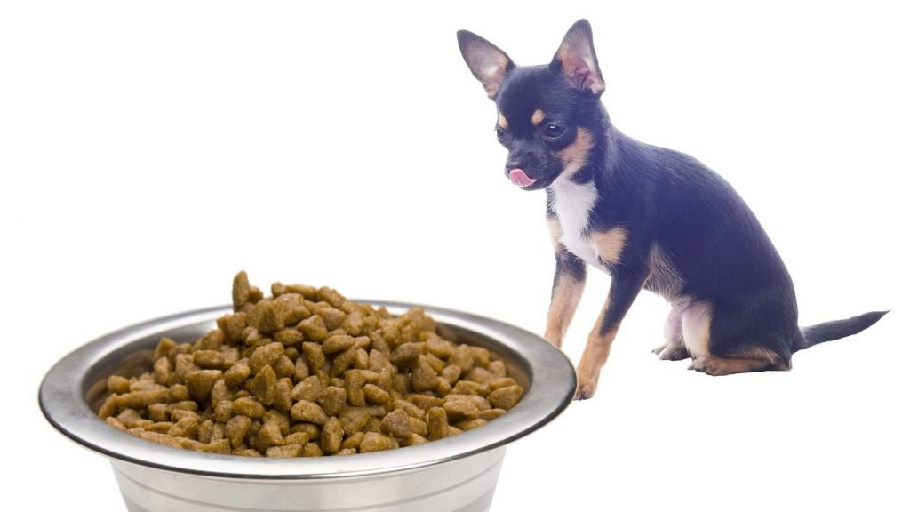Measure your Chihuahua's Food