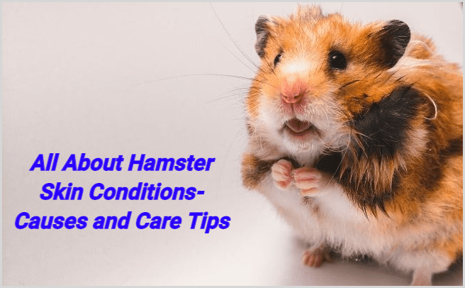 All About Hamster Skin Conditions- Causes and Care Tips