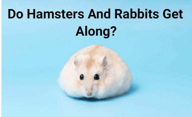 Can Hamsters Live Together In The Same Cage_ (1)