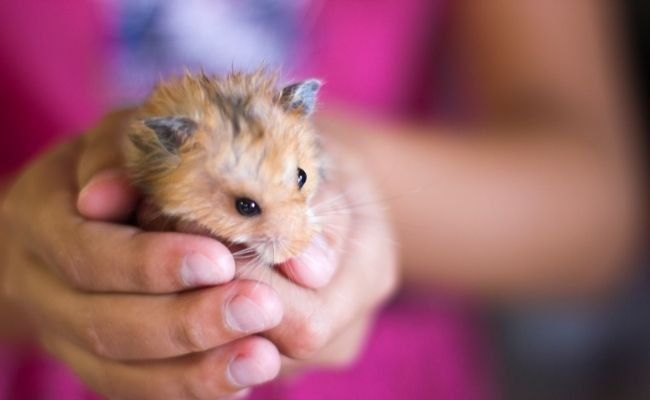 Common Hamster Sounds