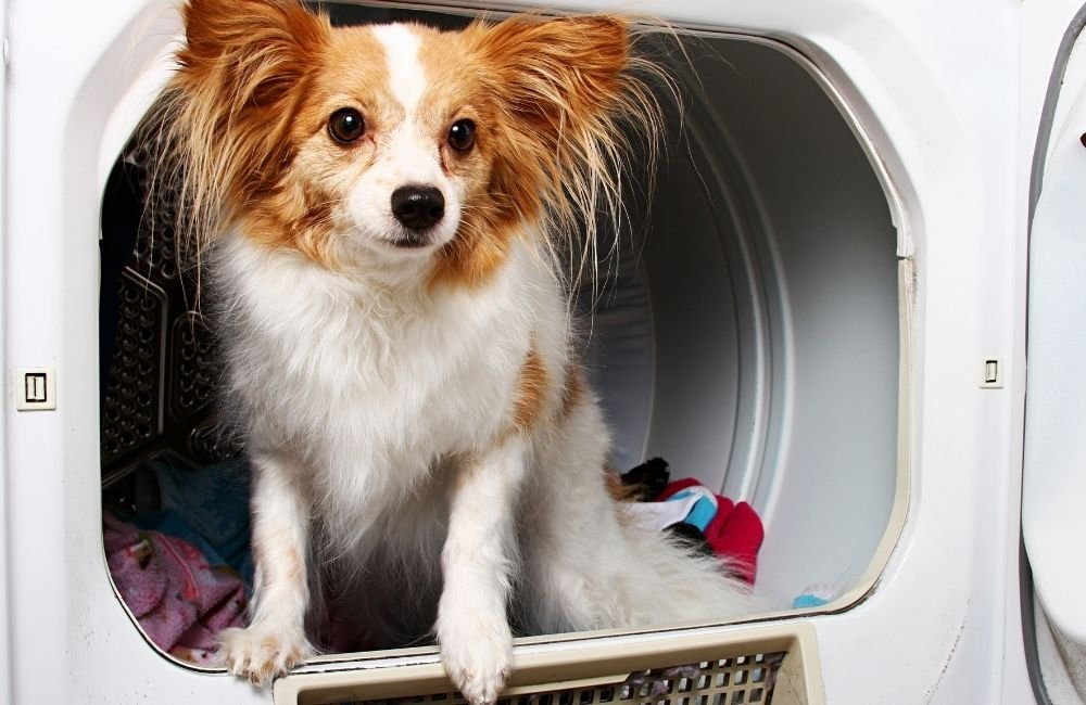 How will I know if my dog has ingested toxic substances such as dryer sheets?