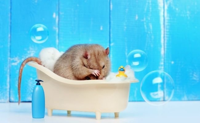 Don't Bathe Your Hamster