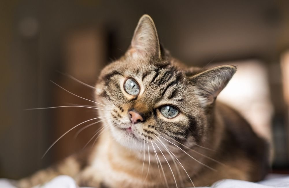 How can I know if my cat can recognize their name