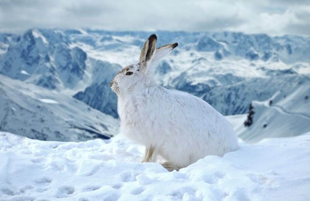 How cold is too cold for your rabbit?