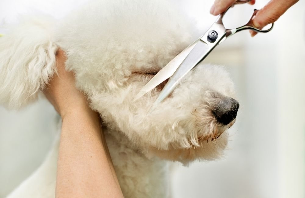Problems caused by fur covering your dog's eyes