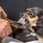Reasons For Possessive Aggression In Dogs