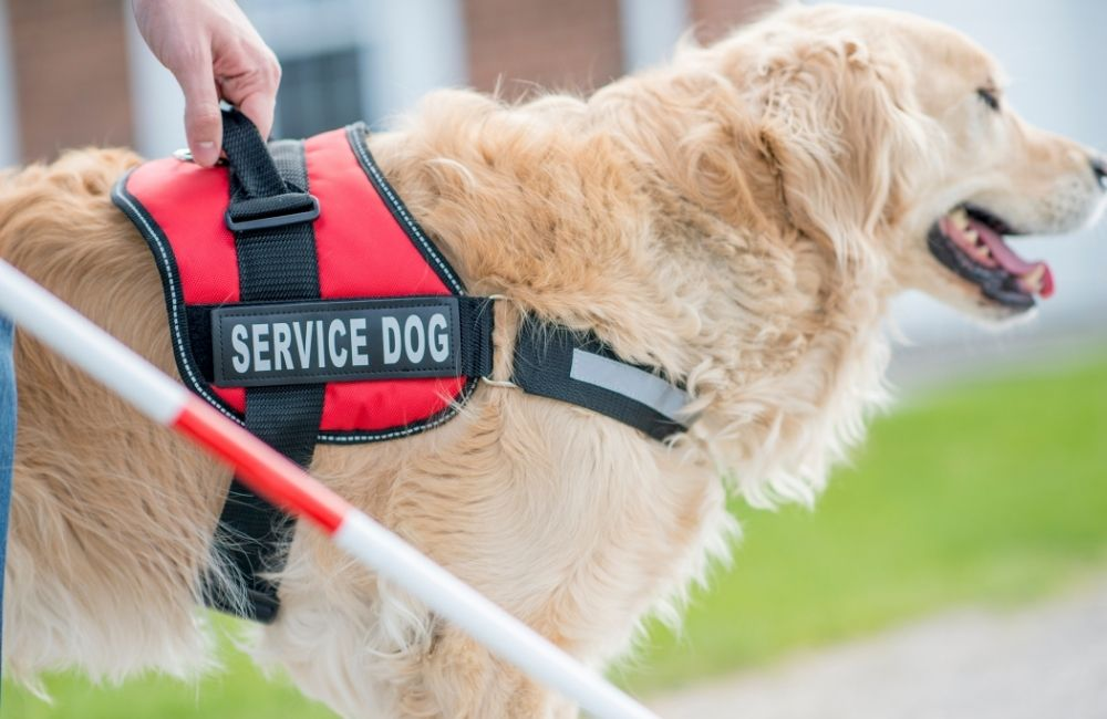 Some qualities that make a good service dog include