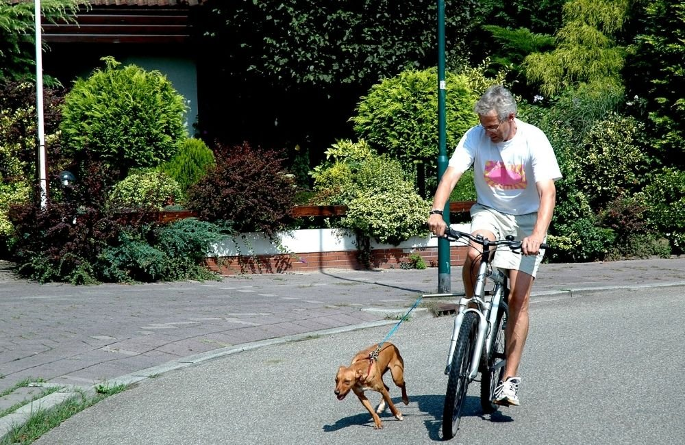 Tips for a successful ride with your pet dog