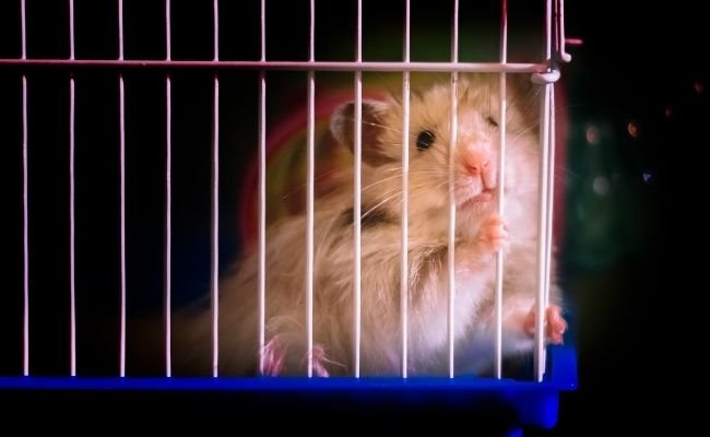 Well-Ventilated Hamster Cage