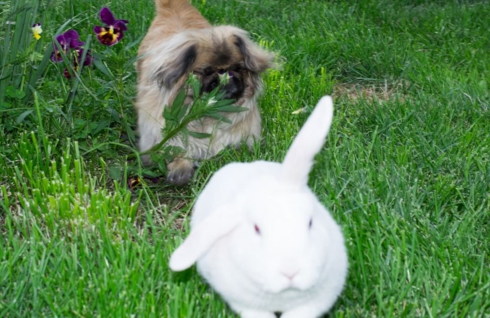 Why Rabbits Are Better Pets Than Dogs